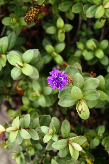 St Nicholas Church Garden Flower